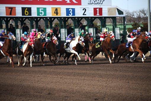 Riyadh horse racing odds